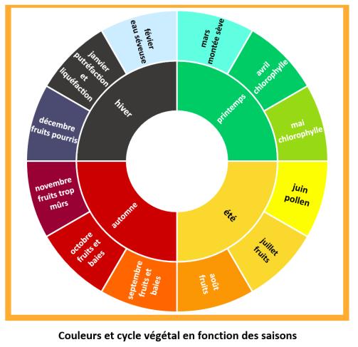 cycle veg 2