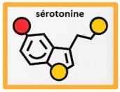 molécule sérotonine encadrée